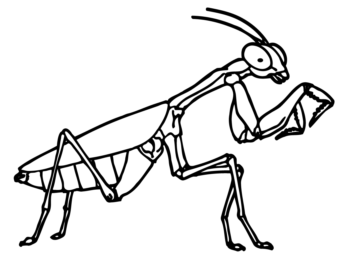 Praying Mantis coloring #1, Download drawings