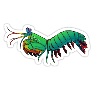 Mantis Shrimp clipart #16, Download drawings