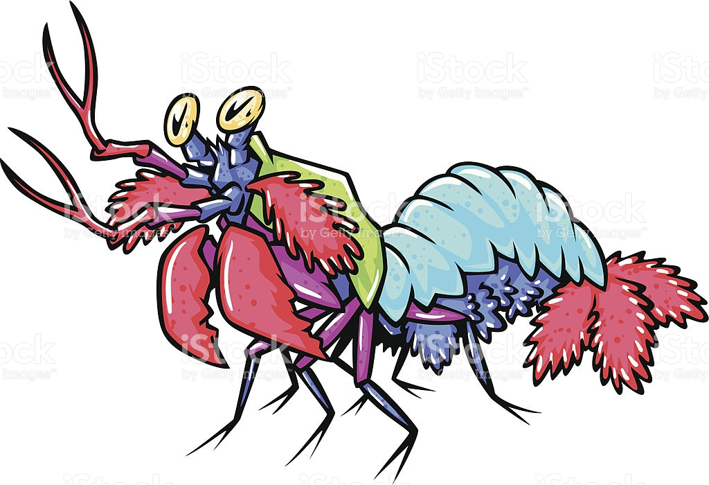 Mantis Shrimp clipart #19, Download drawings