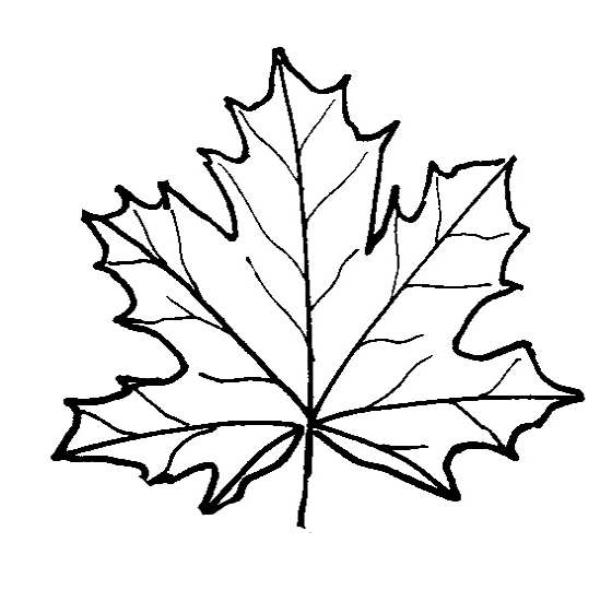 Maple Leaf Coloring Download Maple Leaf Coloring