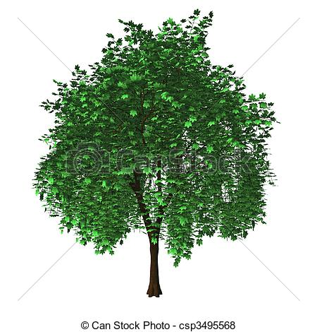 Maple Tree clipart #8, Download drawings