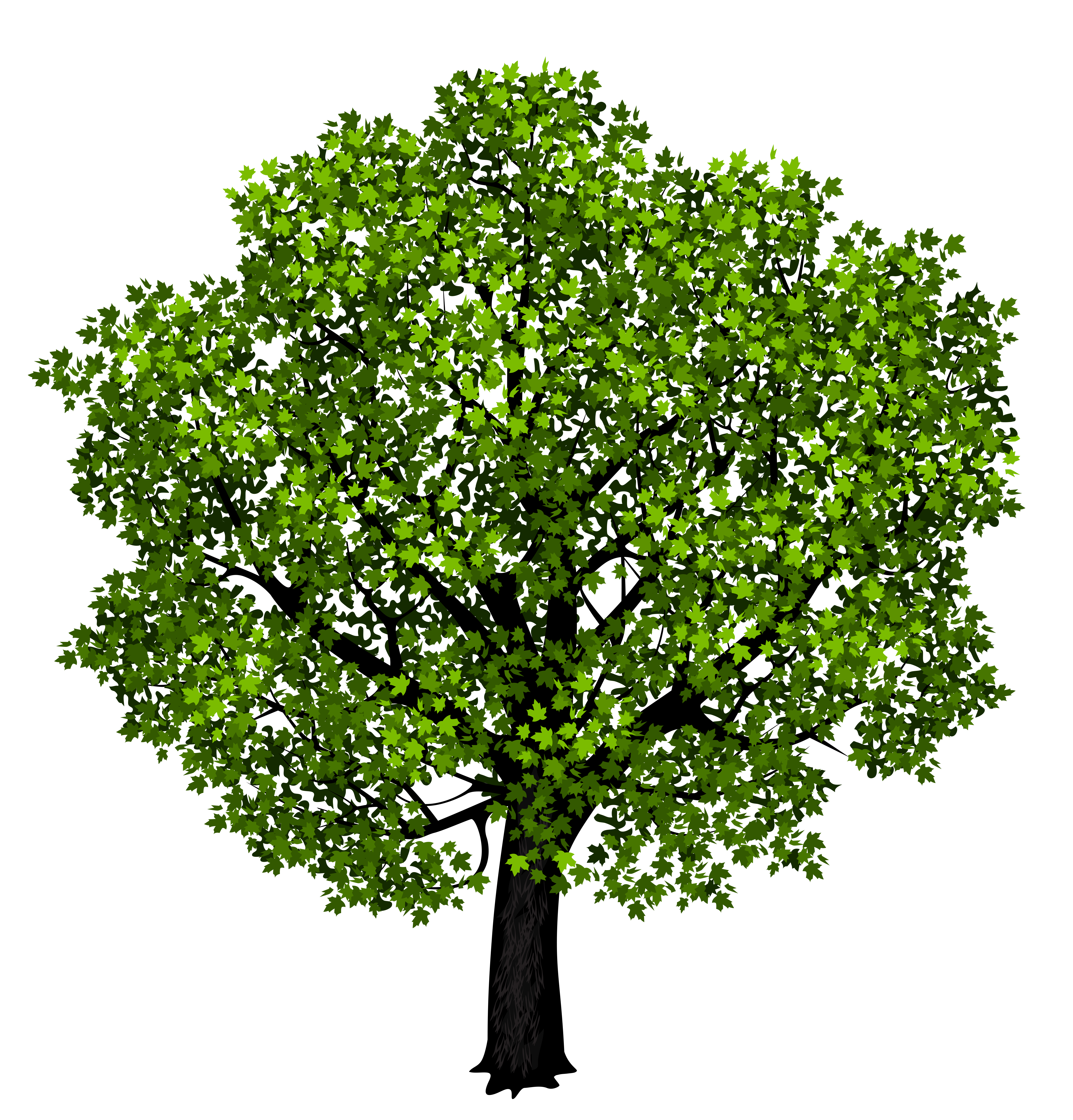 Maple Tree clipart #2, Download drawings