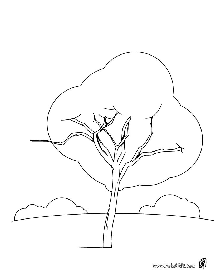 Maple Tree Coloring Download Maple Tree Coloring