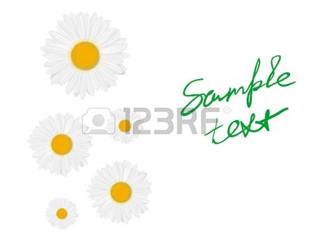 Marguerite clipart #8, Download drawings