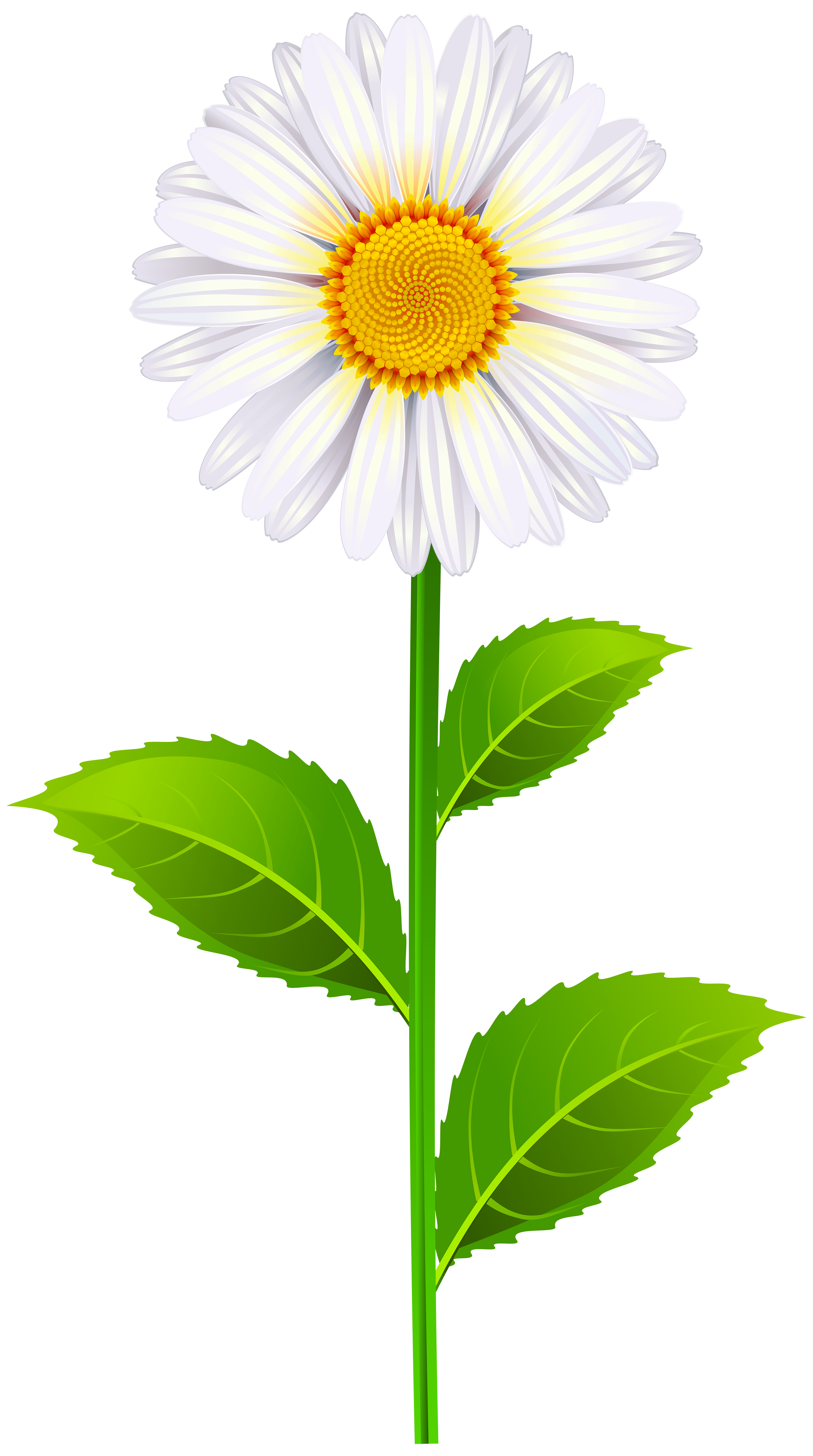 Marguerite clipart #3, Download drawings