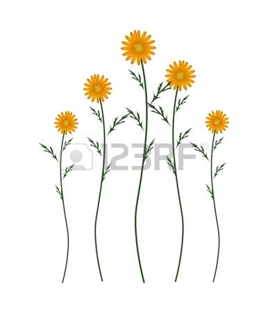 Marguerite clipart #1, Download drawings