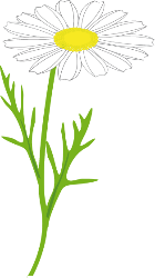 Marguerite clipart #16, Download drawings