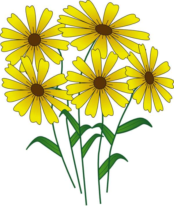 Marguerite Daisy clipart #10, Download drawings