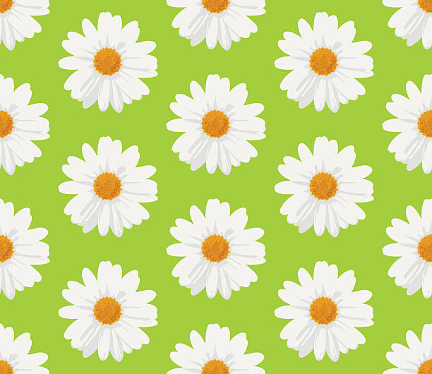 Marguerite Daisy clipart #9, Download drawings