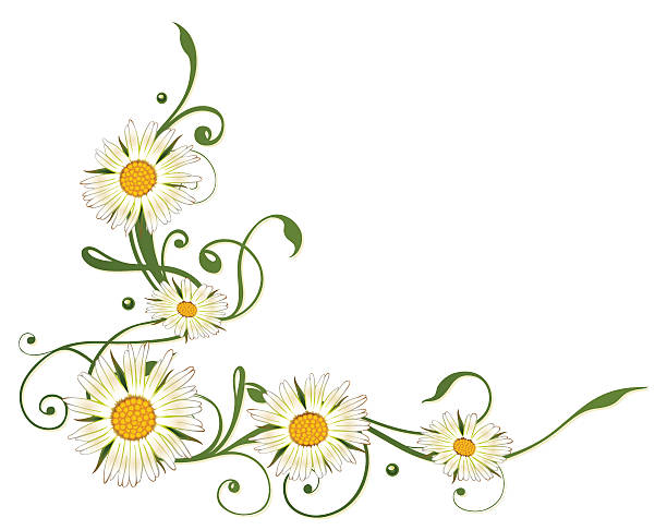 Marguerite Daisy clipart #2, Download drawings