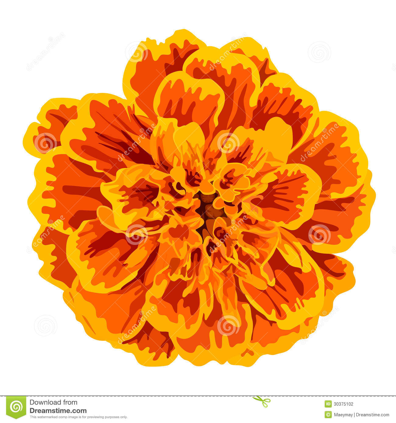 Marigold clipart #9, Download drawings