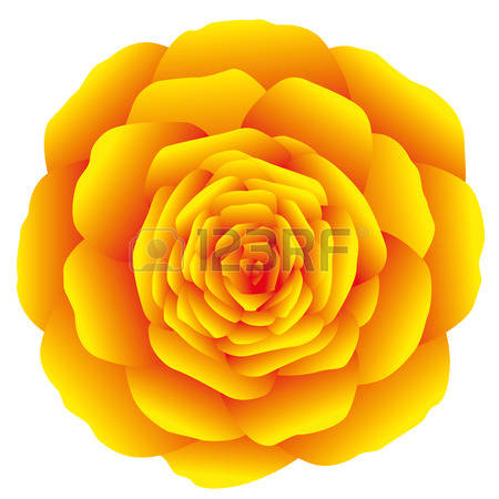 Marigold clipart #5, Download drawings