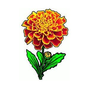 Marigold clipart #12, Download drawings