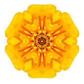 Marigold clipart #8, Download drawings