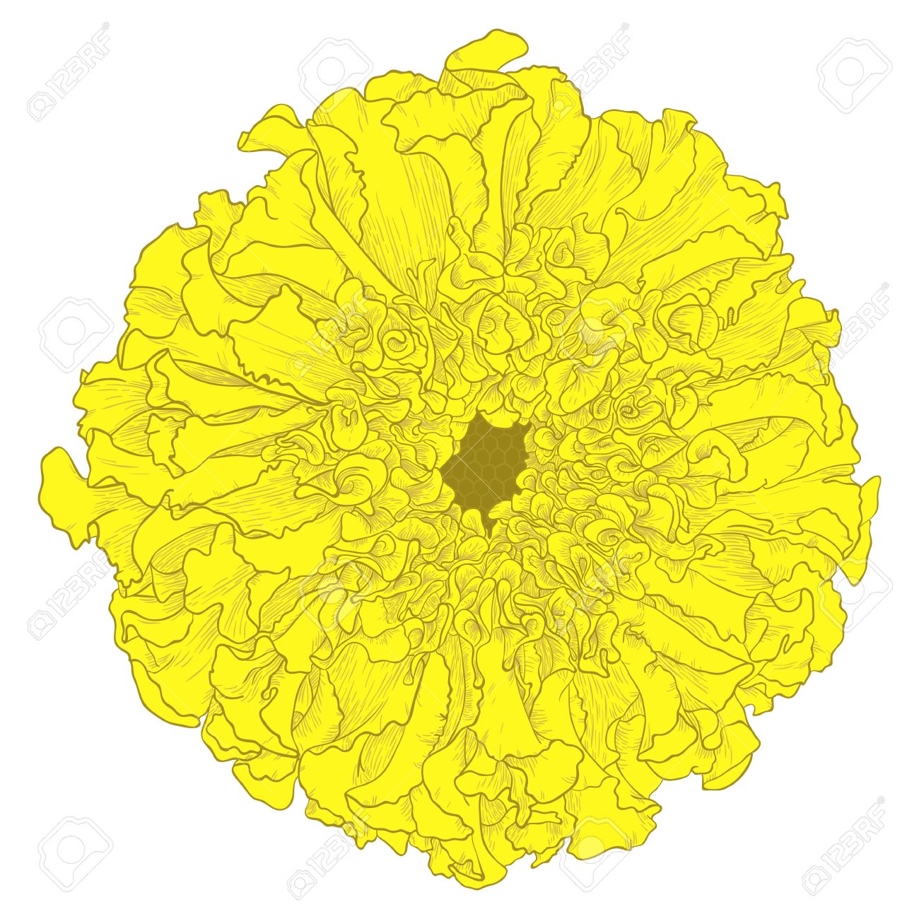 Marigold clipart #3, Download drawings