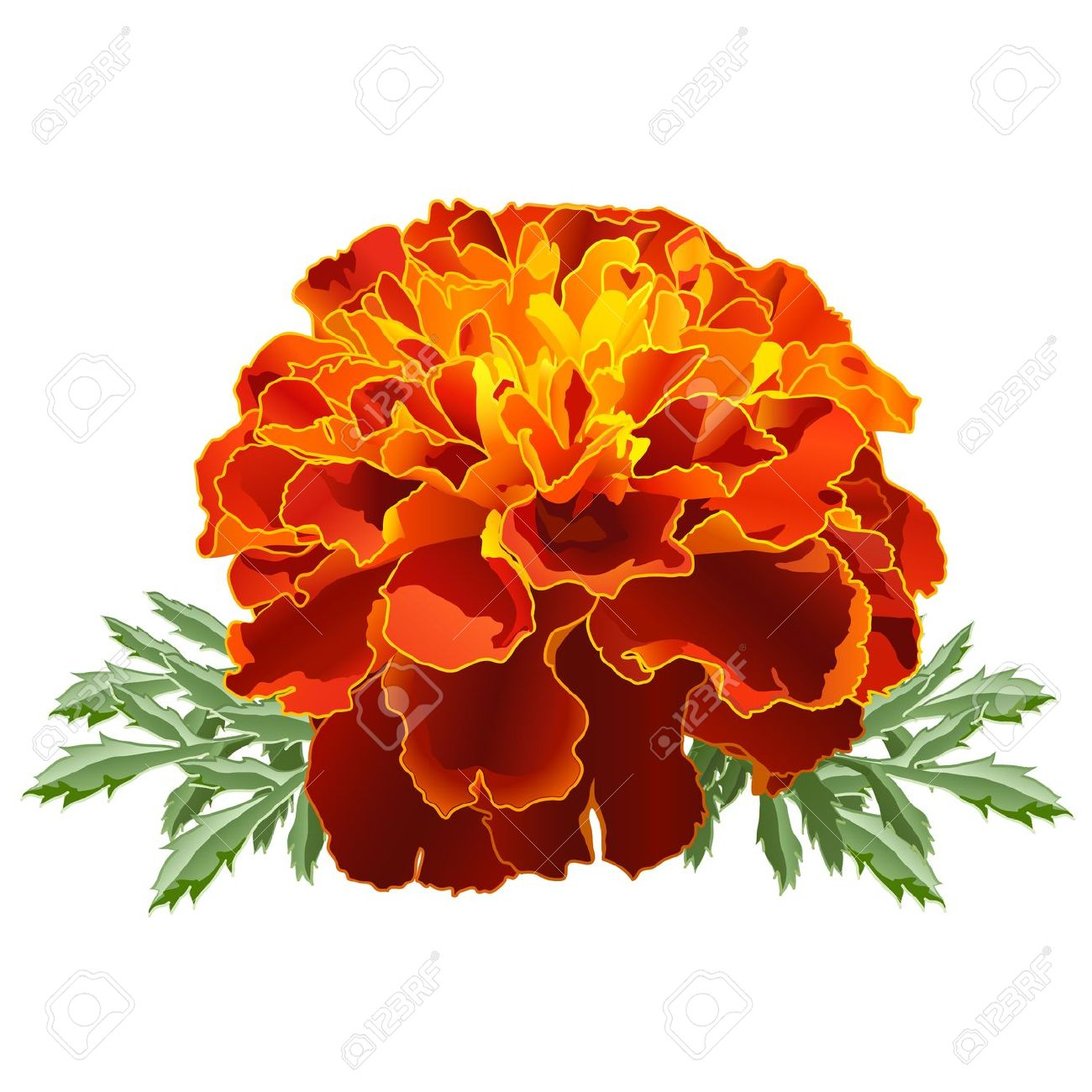 Marigold clipart #11, Download drawings
