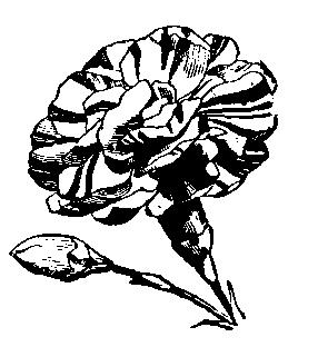 Marigold clipart #1, Download drawings