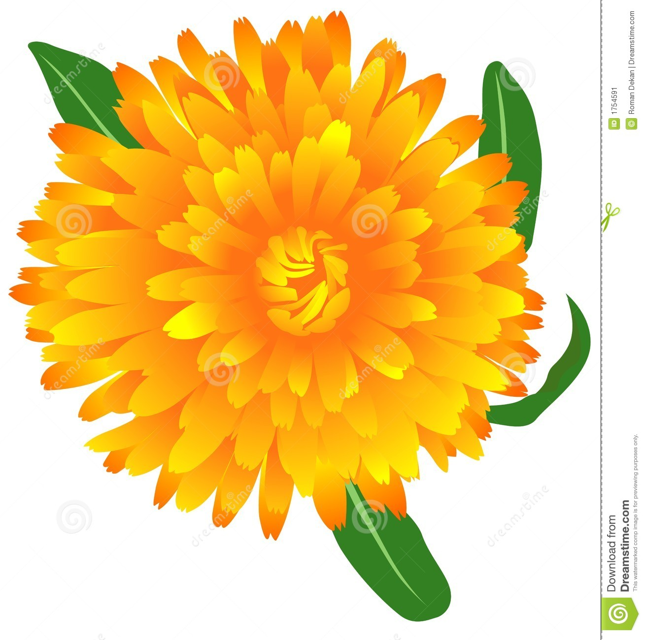 Marigold clipart #15, Download drawings