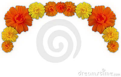 Marigold clipart #18, Download drawings