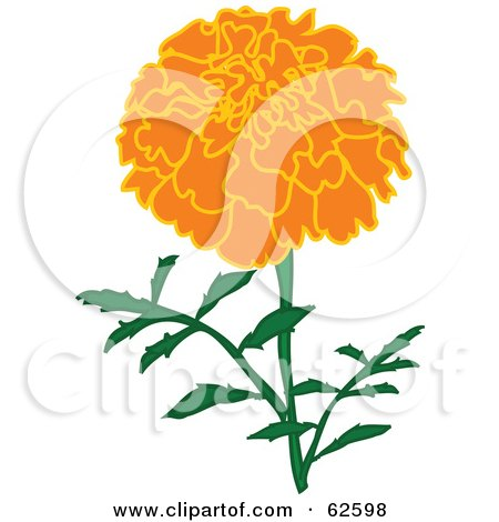 Marigold clipart #7, Download drawings