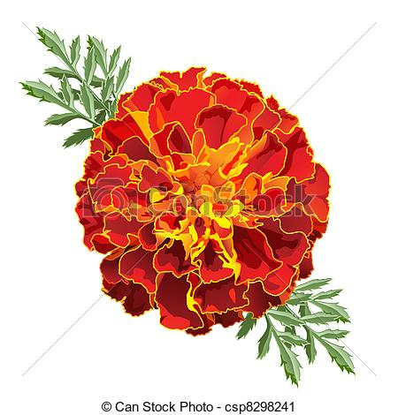 Marigold clipart #10, Download drawings