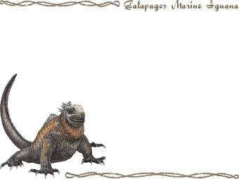 Marine Iguana clipart #5, Download drawings