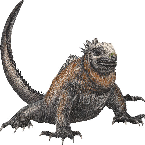 Marine Iguana clipart #10, Download drawings