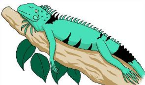 Marine Iguana clipart #20, Download drawings