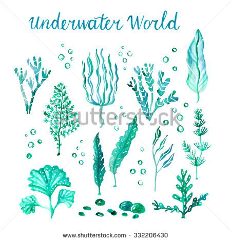 Marine Plant clipart #8, Download drawings
