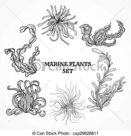Marine Plant clipart #3, Download drawings
