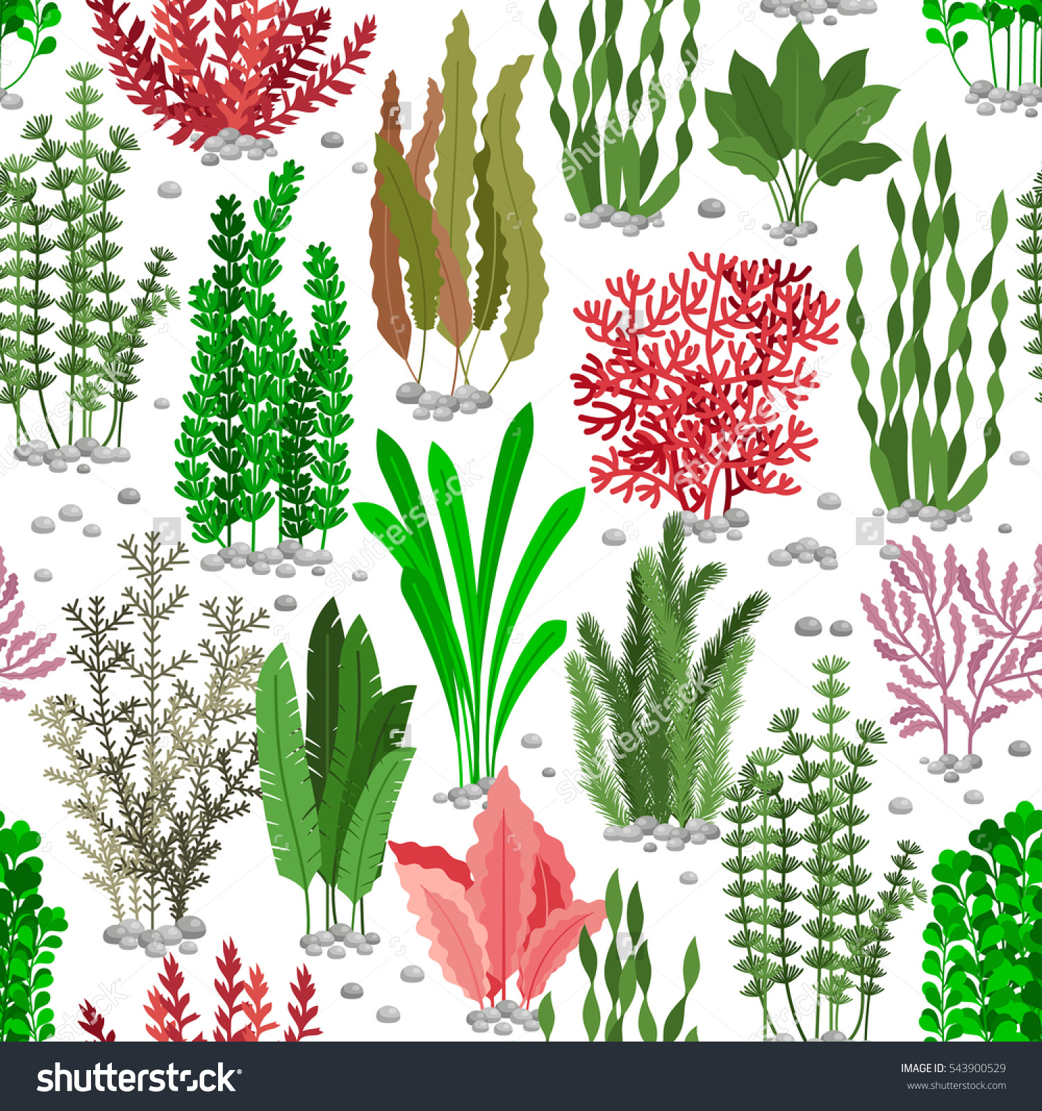 Marine Plant clipart #6, Download drawings