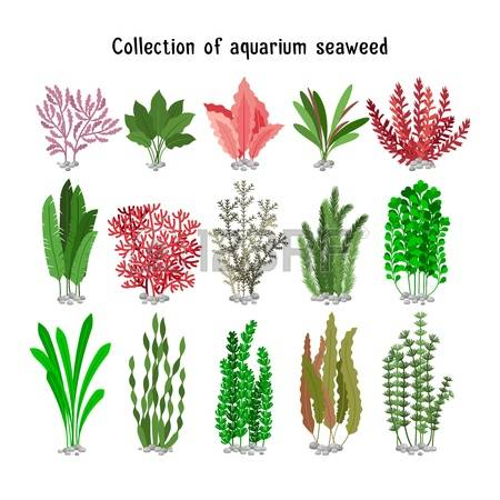 Marine Plant clipart #7, Download drawings