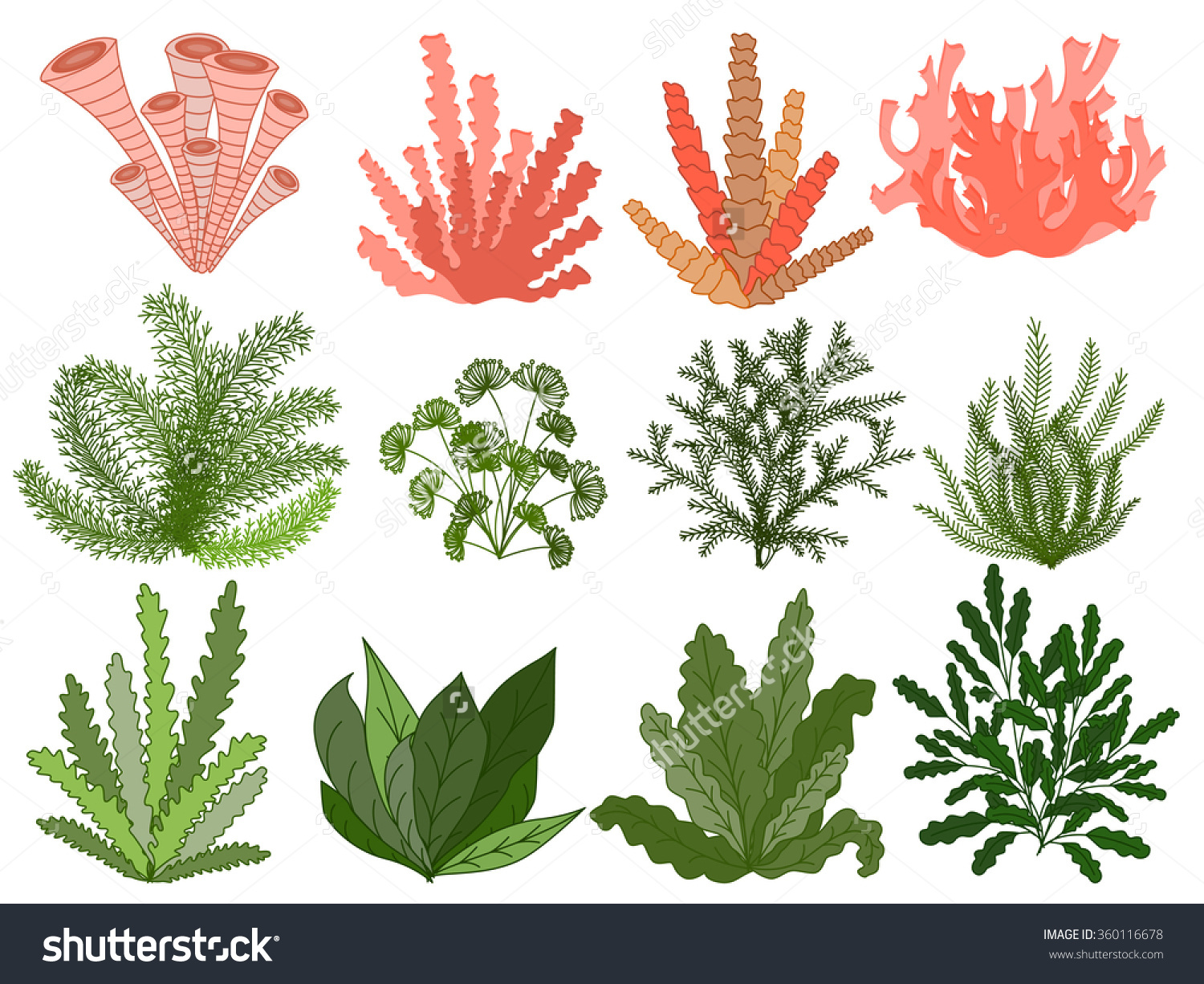 Marine Plant clipart #9, Download drawings