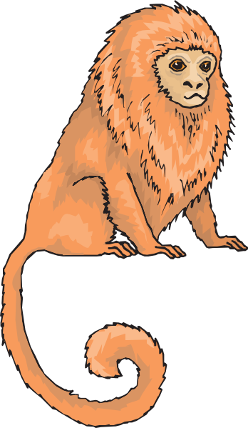 Marmoset clipart #9, Download drawings