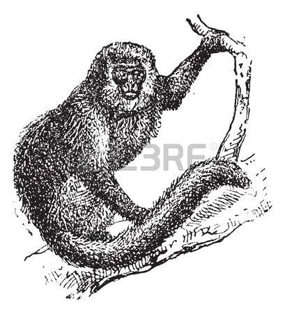 Marmoset clipart #14, Download drawings