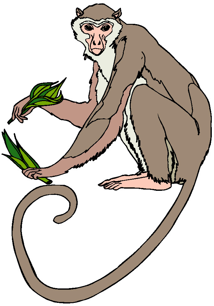 Marmoset clipart #8, Download drawings