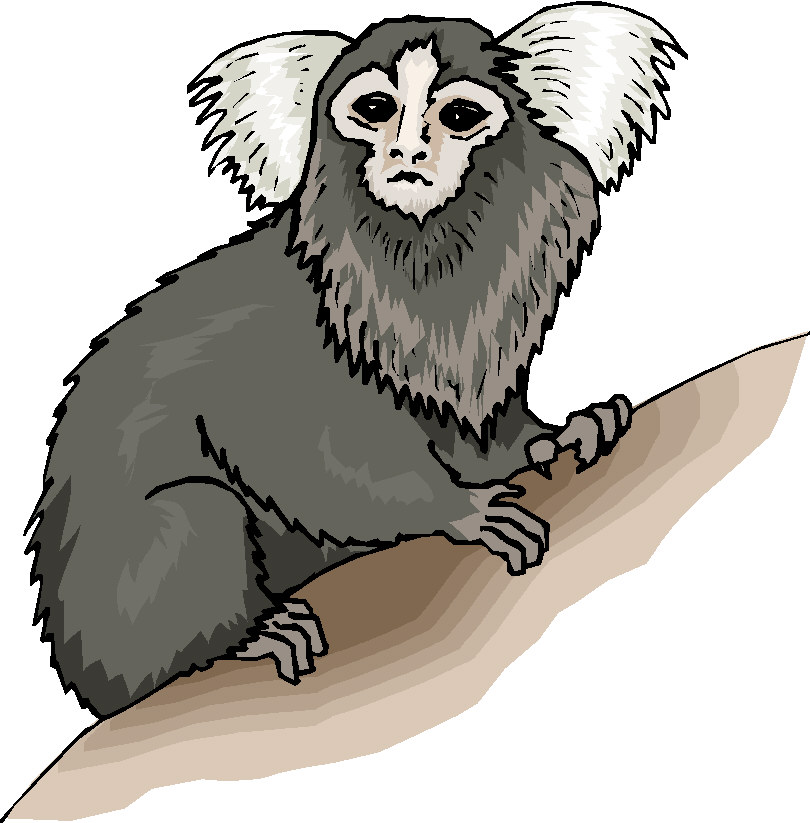 Marmoset clipart #19, Download drawings