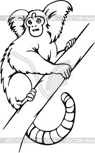 Marmoset clipart #3, Download drawings