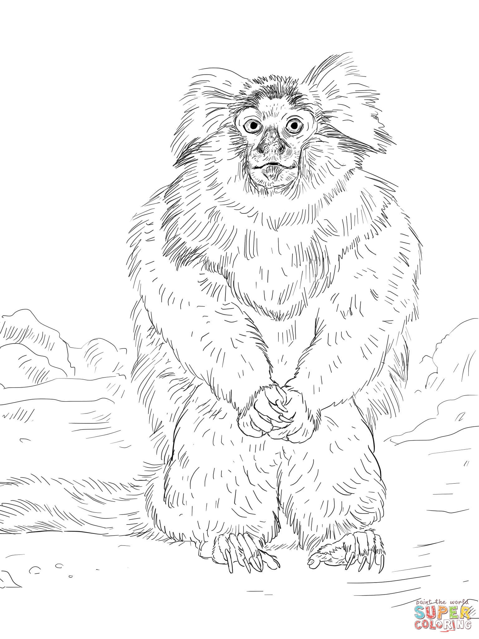 pygmy marmoset coloring pages - photo#9