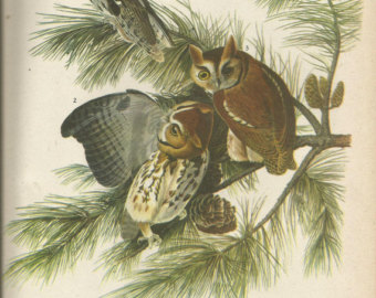 Marsh Owl clipart #2, Download drawings