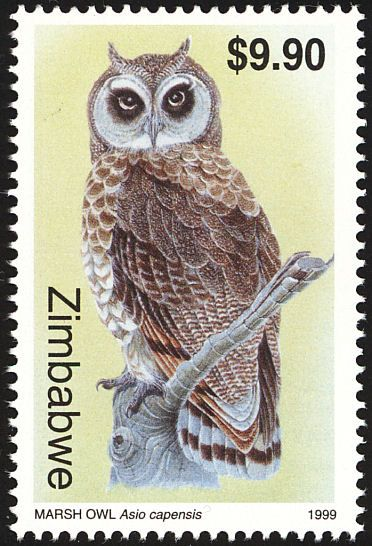 Marsh Owl clipart #4, Download drawings