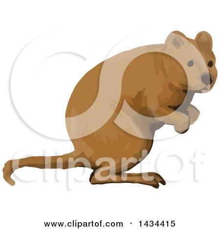 Marsupial clipart #7, Download drawings