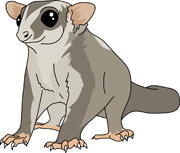 Sugar Glider clipart #19, Download drawings