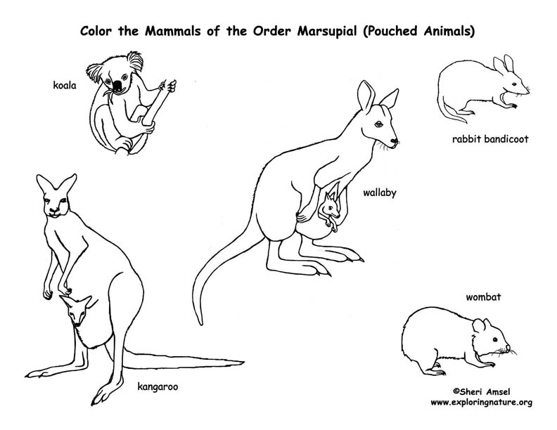 Marsupial coloring #18, Download drawings