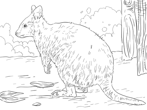 Marsupial coloring #3, Download drawings