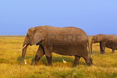 Masai Mara clipart #7, Download drawings