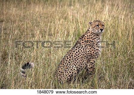 Masai Mara clipart #14, Download drawings