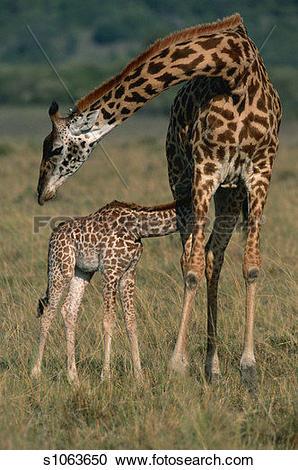 Masai Mara clipart #10, Download drawings