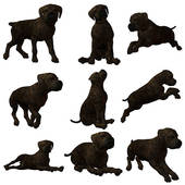 Mastiff clipart #14, Download drawings