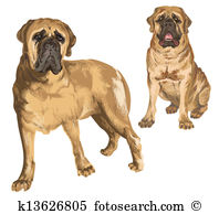 Mastiff clipart #18, Download drawings